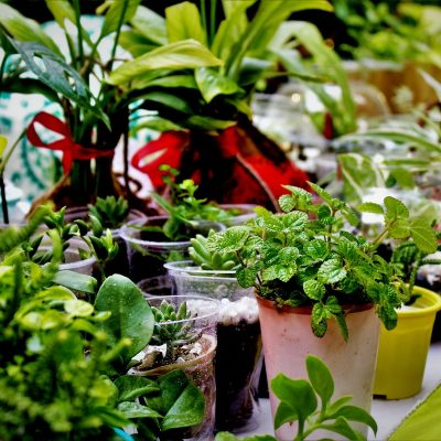How to find out best Indoor House Plants